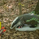 3D Archery Targets – Hunting Without Killing