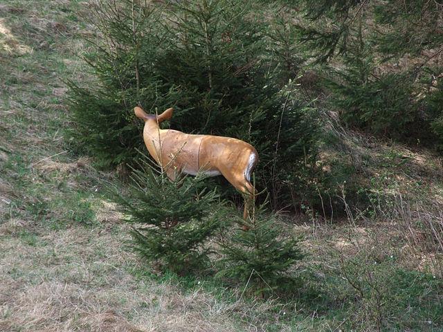 3d target deer